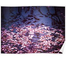 Spring's Embers - Cherry Blossom Petals on the Surface of a Pond Poster