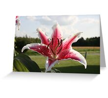 SPRING LILY - BEAUTIFUL EVENING Greeting Card