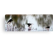 black - winged stilts  Canvas Print