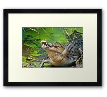 Crocodilian eating Framed Print