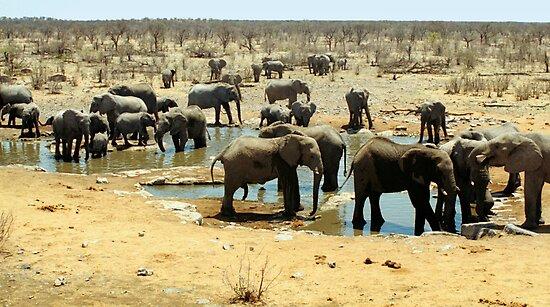 Elephant Herd by Carole-Anne
