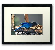 "' Thief "" Framed Print"