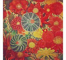 Mexican garden  Photographic Print