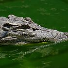 Crocodilian swimming by Debellez