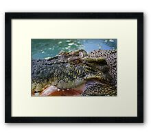 Crocodilian with open mouth Framed Print