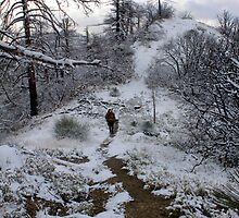 Winterland by maybs