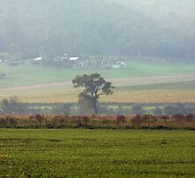 Yarra Valley     IMG_9893 by rjpmcmahon