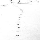 Pawprints - Run Free by Sally J Hunter