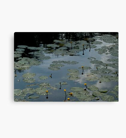 Popping Out Canvas Print