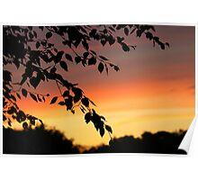 Sunset Leaves Poster
