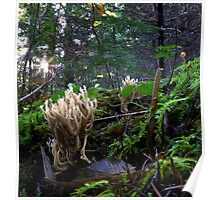 Wild Coral Mushroom Poster