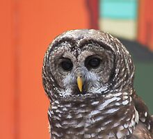 *Barred Owl Portrait* by DeeZ (D L Honeycutt)