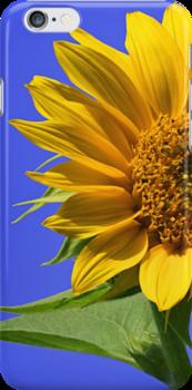 Sunflower by Kelly Cavanaugh