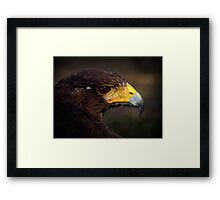 Raptor Extravaganza ~ Part Three Framed Print