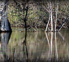 The Flooding at Rotary Pond, Caldwell, Idaho by trueblvr