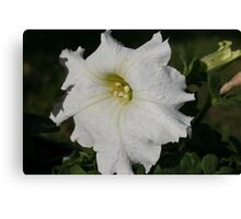 SNOW WHITE BLOOM Canvas Print