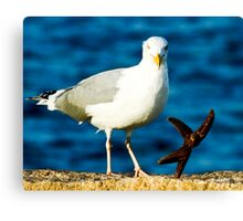 Starfish and Seagull Dancing on the Rocks Canvas Print