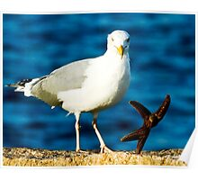 Starfish and Seagull Dancing on the Rocks Poster
