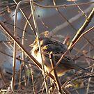 Spring Sparrow by ArtOfE