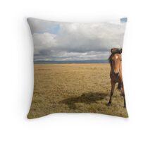 Icelandic Horse Throw Pillow