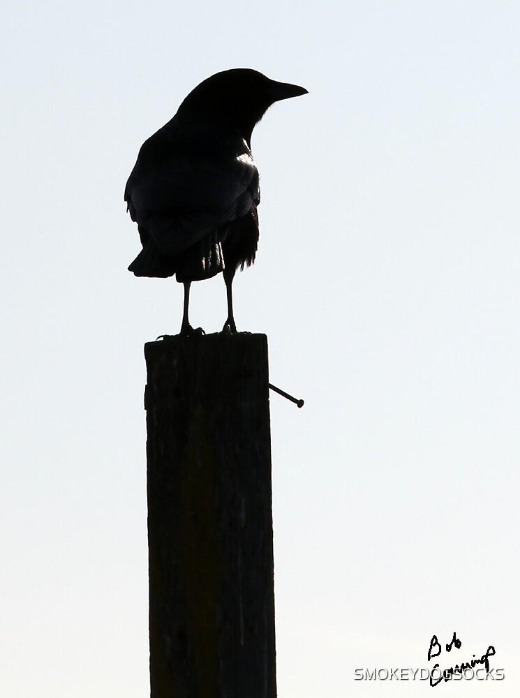 THE BLACK CROW by SMOKEYDOGSOCKS