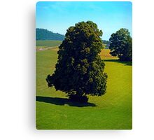 Another boring old tree Canvas Print