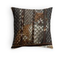Ginger in Jail, Sancti Petri, Spain 2012 Throw Pillow