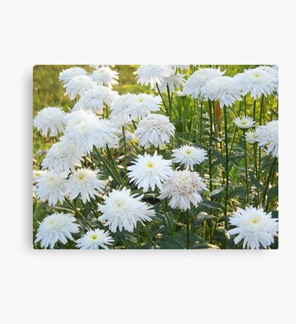White And Beautiful Canvas Print