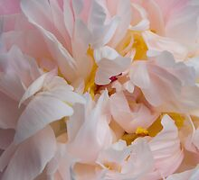 Pink Peony Storm by Rod J Wood