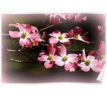 Immersed in Pink Dogwoods! Poster