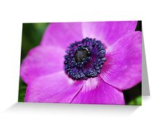 Anemone's Heart II Greeting Card