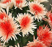 flowers   by mrivserg