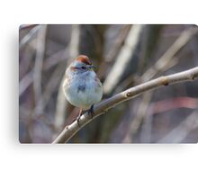 an American Tree Sparrow Canvas Print