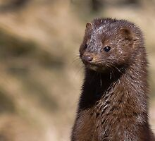 Mink by michelsoucy