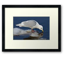 Reflecting drink Framed Print