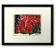 HUMMINGBIRD'S HONEY Framed Print