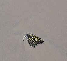 One Bird's Wing by kashmirecho