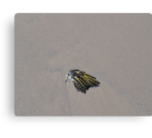 One Bird's Wing Canvas Print