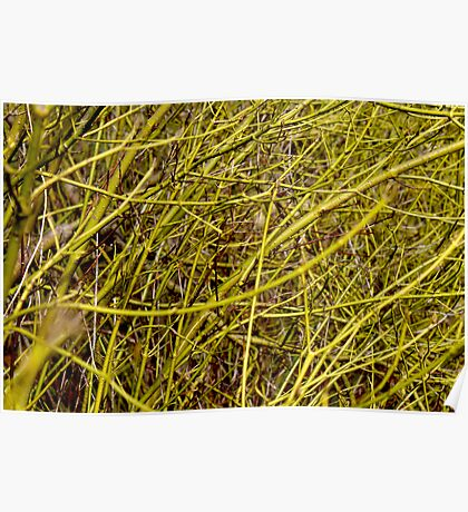 Exposed Branches Poster