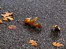 Dancing Leaves by Nevermind the Camera Photography