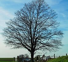 Barren Tree on a Country Road by Nevermind the Camera Photography