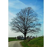 Barren Tree on a Country Road Photographic Print