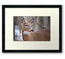 Whitetail doe Framed Print