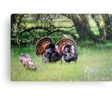 Male Turkeys Metal Print