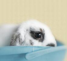 Baby Wabbit by Evita