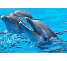 dolphin fish ocean wildlife animal sea seaworld athletic beautiful body elegant perfection pose nature animal beautiful body Photographic Print