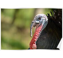 Turkey Closeup Poster