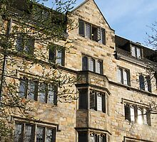 Yale Cambridge Oxford by Jane McDougall