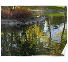Canada Geese On Fall Pond Poster