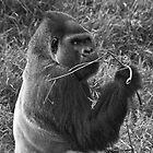 "Motaba ""silverback Gorilla"" by LJ_©BlaKbird Photography"